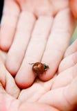 Ladybug. Macro image of a ladybug Stock Photo