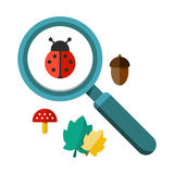 Ladybug and a magnifying glass. Vector illustration of a ladybug by a magnifying glass. Insect under magnifier zoom lens. Flat design vector. For web and Royalty Free Stock Image