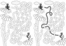 Ladybug maze. For kids with a solution in black and white vector illustration