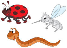 Ladybug, mosquito and worm Stock Images