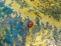 Ladybug on a multi-colored blanket. Stock Images