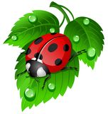 Ladybug na folha Fotos de Stock Royalty Free