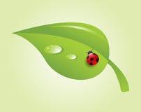 Ladybug na folha ilustração stock