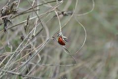 Ladybug121213131414 Royalty Free Stock Photography