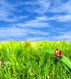Ladybug at nature Stock Photography