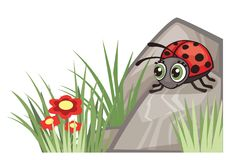 Ladybug nature corner design decoration. Nature inspired corner decoration with ladybug and meadow plants. All elements are grouped together logically and can Royalty Free Stock Photography