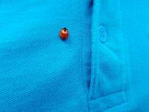 Ladybug near the slit pocket royalty free stock image