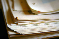 Ladybug on newspaper Royalty Free Stock Image