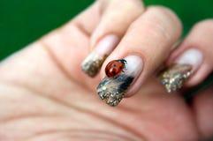 Ladybug no prego de uma mulher Fotos de Stock