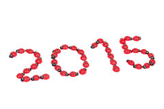 Ladybug numbers for 2015 Stock Images