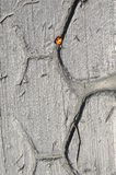 Ladybug on the old wheel. Stock Images