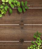 Ladybug On Leaf. Old Wood Royalty Free Stock Photos
