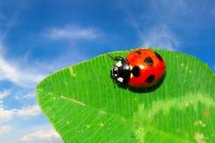 Free Ladybug On The Leaf Stock Image - 5864041