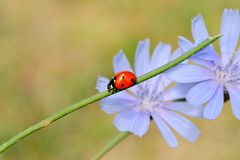 Ladybug outdoor Stock Photos