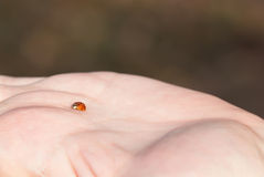 Ladybug on Palm of Hand Royalty Free Stock Photography
