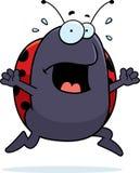Ladybug Panic Royalty Free Stock Photos