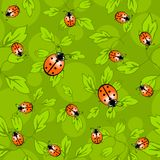 Ladybug pattern - colorful pattern of ladybug and leaves. royalty free illustration