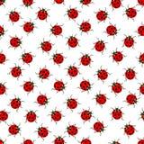 Ladybug pattern Stock Photography