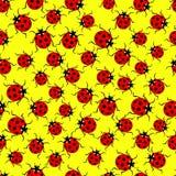 Ladybug pattern Stock Image