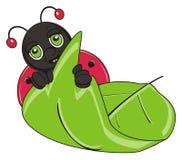 Ladybug peek up from the leaf. Smiling muzzle of ladybug stick out from the large green leaf Stock Image