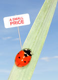 Ladybug price Stock Photos