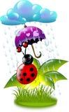 Ladybug in rain Royalty Free Stock Images
