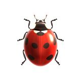 Ladybug realistic isolated vector illustration