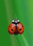 Ladybug realistico Royalty Illustrazione gratis