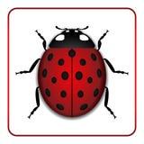 Ladybug red cartoon icon realistic Stock Image