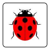 Ladybug red cartoon icon realistic Stock Images