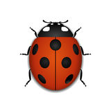 Ladybug red cartoon icon realistic Stock Photos
