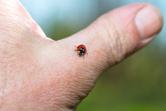 Ladybug resting on a finger Royalty Free Stock Photos