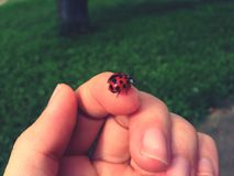 Ladybug. It& x27;s the little things in life Stock Photos