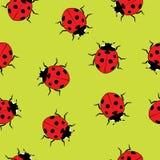 Ladybug seamless pattern. vector  Stock Photography