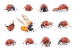 Ladybug set on white background Royalty Free Stock Image