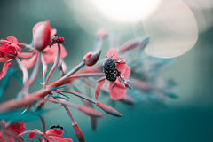 Ladybug sits on a flower. Pink blue flower and beetle in white dot on it Royalty Free Stock Image
