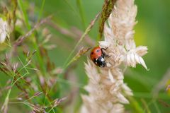 Ladybug sits on plant Stock Photography