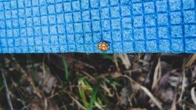 Ladybug sitting on a blue picnic rug closeup royalty free stock image