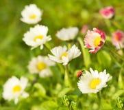 Ladybug sitting on flower Stock Images
