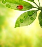 Ladybug sitting on a green leaf.