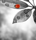 Ladybug sitting on a leaf. Stock Photos