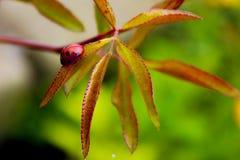 Ladybug sitting on a leaf stock photo