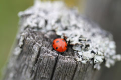 The ladybug Stock Photos