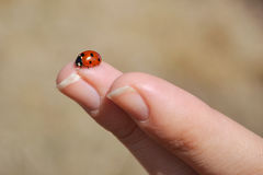 A ladybug sitting on a woman finger with blurry background Royalty Free Stock Photography