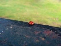 Ladybug sitting on Wood Beam Stock Photo