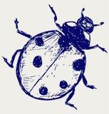 Ladybug sketch Stock Image