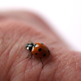 Ladybug on skin. Macro, shallow DOF stock photography