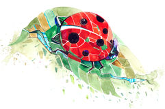 Ladybug. Small insect with polka dots Royalty Free Stock Photography