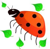 Ladybug with a smile. royalty free stock images