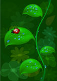 Ladybug on stalk Royalty Free Stock Photography